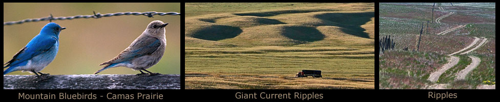 Camas Prairie Giant Current Ripples.